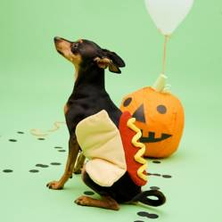 Yamp - Disfraz para Perro de HotDog