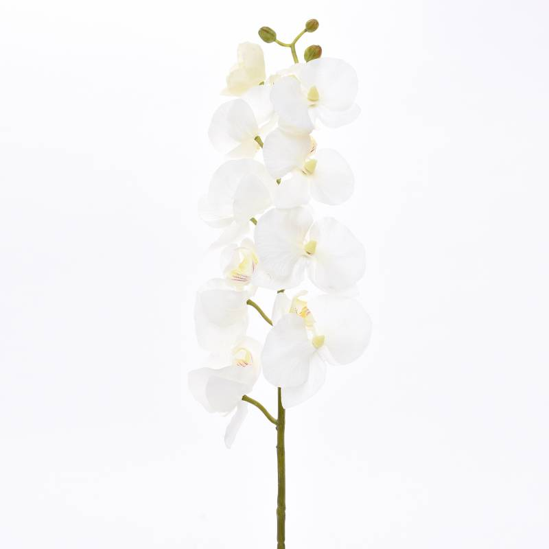 Mica - Flores Varas Orquideo