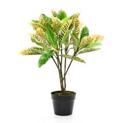Mica - Planta Croton Verde 65 cm