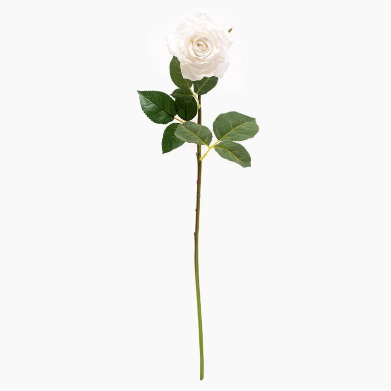 Mica - Rosa Blanca 70 cm