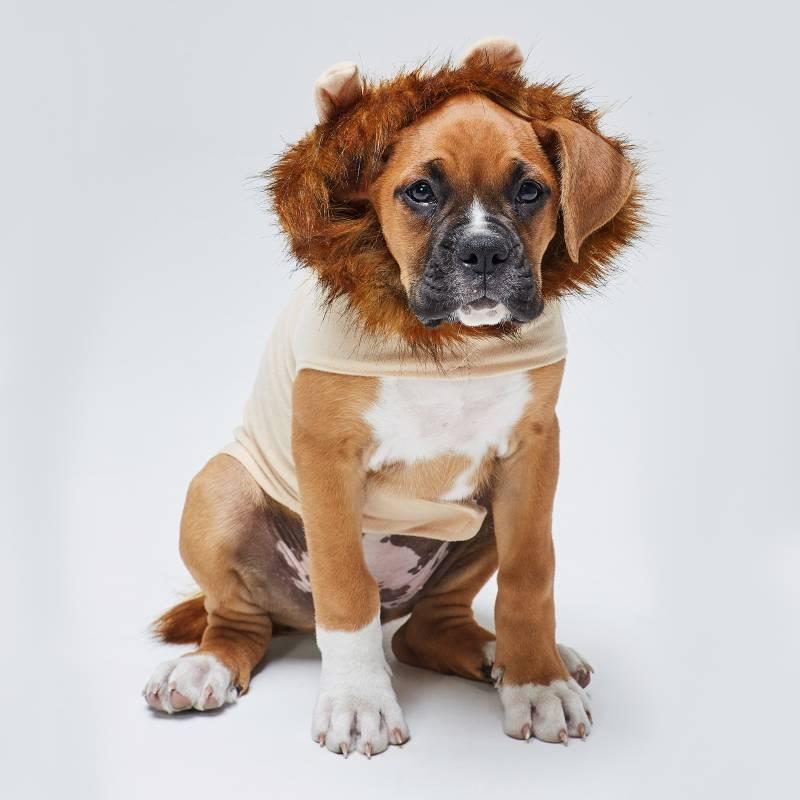 Yamp - Disfraz de León para perro