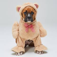 Yamp - Disfraz Perro Teddy