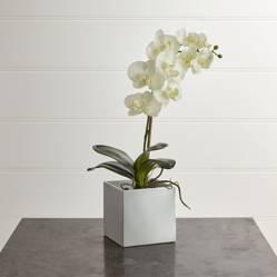 CRATE & BARREL - Orquídea en Maceta Grande