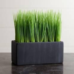 CRATE & BARREL - Grass en Maceta Grande