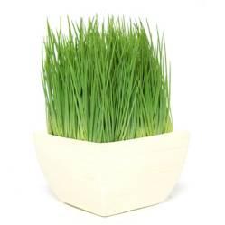 MICA - Malt Grass 23 cm