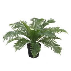 MICA - Planta Gibbum 50cm