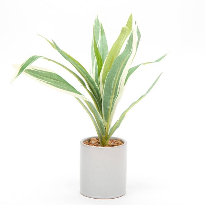 MICA - Planta Dorado 20 cm